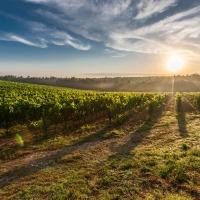 $16 billion farm aid to help American farmers: U.S. agriculture secretary Sonny Perdue