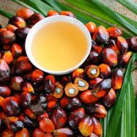 Malaysia Files Case Against EU At The WTO Over Restrictions On Palm Oil As Biofuel